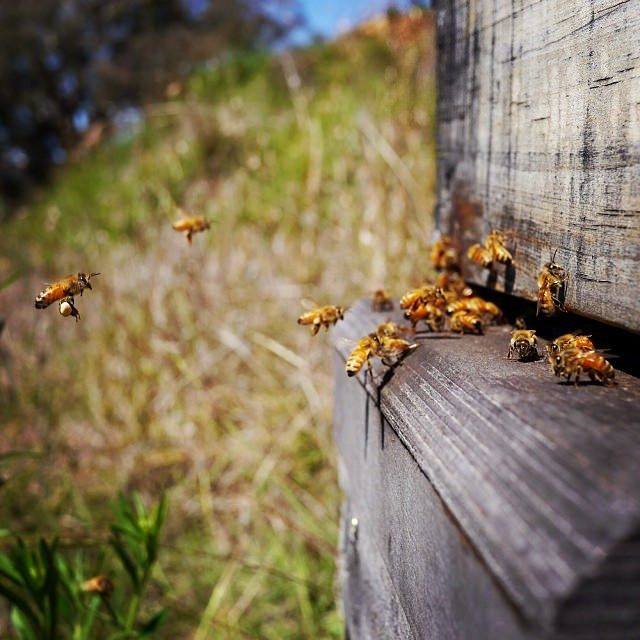 Friday Bill Roundup: Beekeepers, Eviction and More